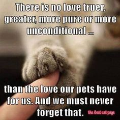 The love of God is reflected in our pets' love for us - unconditional. Cat Love, I Love Dogs, Puppy Love, Cute Dogs, Schnauzers, Dachshunds, Dog Quotes, Animal Quotes, Animal Memes