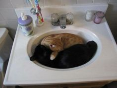 These brothers love sleeping in the sink...