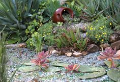 Succulents look gorgeous, even during drought. They've got their own moisture sources, says Debra Lee Baldwin, succulent expert and author of three books on the subject.