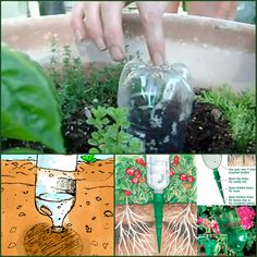 watersysteem voor tuinieren in potten. Dan kan je ook nog eens een weekendje weg.
