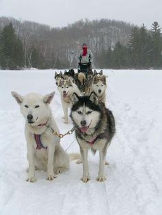 Traîneau à chiens dans les Laurentides - 6 activités à essayer cet hiver
