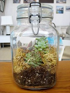 terrarium in a jar. picturing this in different sized mason jars arranged together