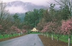 Picturesque Niebaum Lane runs up to the Niebaum Coppola Estate Winery.