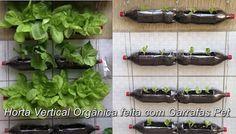 Mundo das Plantas : Horta Vertical com Garrafas Pet, Sustentável e Org...