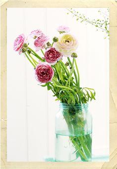 Gostaria ter estas flores na minha mesa de trabalho num dia de chuva como hoje.
