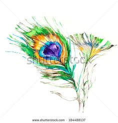 Peacock feathers on white background. Watercolor picture.