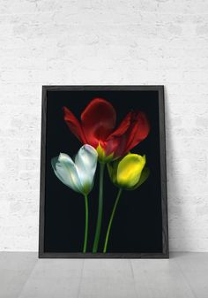 Items similar to Flower Photography floral print nature photography bold red white yellow tulips on Etsy