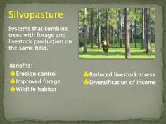 Silvopasture combines livestock with timber production on the same land which benefits the animals by providing shade among other things. Slide courtesy of the USDA National Agroforestry Center.