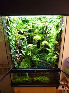 Well done. Well done indeed. Terrarium de Aurélien, Dendrogroves, pas de post de création