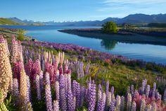 New Zealand  - ELLEDecor.com