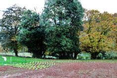 Nuestra huerta esta rodeada de arboles y vegetacion que en otoño y primavera ofrecen un colorido maravilloso.