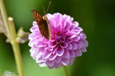 Mariposa y flor Plants, Flower, Naturaleza, Fotografia, Planters, Plant, Planting
