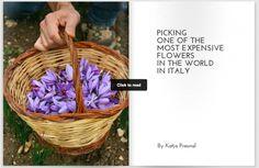 Discover with us all secret about the best saffron in the world! #Abruzzo #italy #navelli #saffron #zafferano
