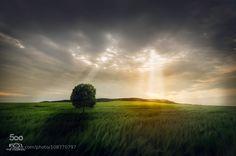 Lonely by ValiVadanoiu. (http://ift.tt/1EMp1AE)