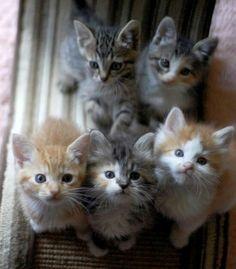 Kittens Cuteness ♥ Lovely Cats