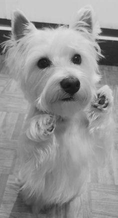 Charlotte - A fresh clean puppy.