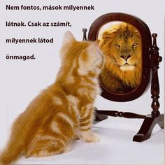 """""""What Matters Most Is How You See Yourself."""" Words to live by. Self Confidence means you can still be happy with yourself regardless of success or failure What Matters Most, All That Matters, Family Matters, Funny Animal Pictures, Funny Animals, Cute Animals, Funny Cats, Funny Images, Weird Cats"""