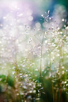 Dreamy meadow...