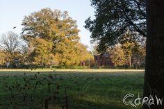 http://blog.qdraw.nl/twello-en-omgeving/herfst-twello-2014/  Herfst Twello (2014)  bladeren
