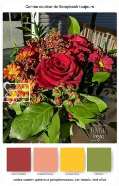#17 Combo COULEUR de Scrapbook toujours Stampin Up, Scrapbook, Plants, Color, Stamping Up, Scrapbooking, Plant, Planets, Guest Books
