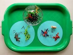 Joyfully Weary: Preschool Syllabus: Reptiles Great for Emma and Isaac