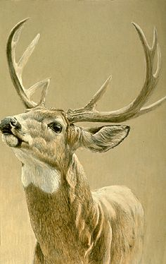 Robert Bateman - whitetail deer painting