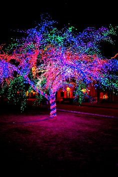 The Magic Tree...Columbia, Missouri...it's truly magical. Parents - you need to take pics of your kids with this tree every year...