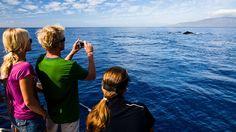 Humpbacks, in growing numbers, return to Hawaii: Travel Weekly