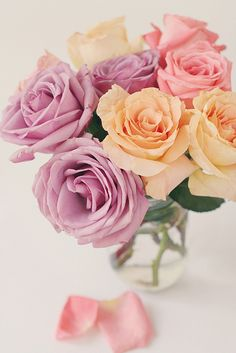 Beautiful Roses!
