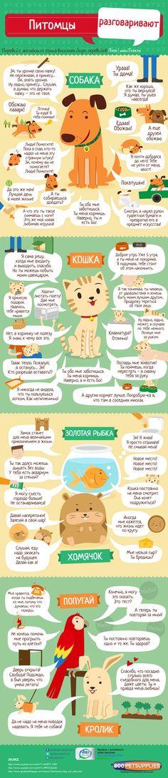 Что сказали бы наши питомцы, если бы умели говорить по-человечьи? Сегодня инфографика по интересам нашего менеджера Дарьи Веденичевой (Силаевой). Правда, они милые? http://itrex.ru/news/pitomtsy-rasgovarivaut