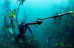 Incredible underwater photo of free diver with a speargun (spearfishing)