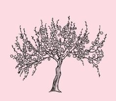 blossoming apple tree drawing - Google Search