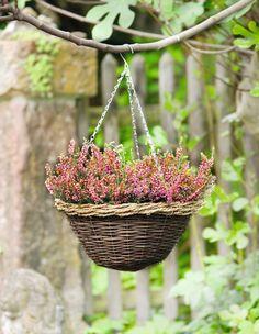 blumenampel hängekorb hängeampel hängetopf pflanzenampel