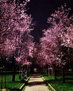 Primavera alla Martesana