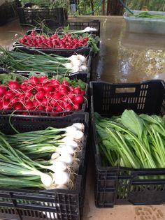 Fresh vegetables grown at Bago Fresh Vegetables, Growing Vegetables, Bago, Wine Recipes, Table Decorations, Food, Home Decor, Decoration Home, Room Decor