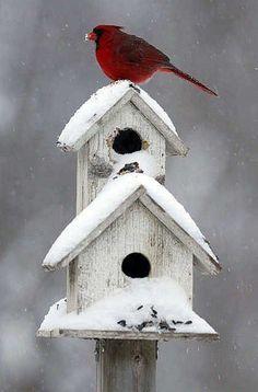 mum always had bird houses outside and we had lots of birds. the cardinals lived on our oak tree! Pretty Birds, Beautiful Birds, Hirsch Illustration, Cardinal Birds, Winter Garden, Winter Scenes, Bird Feathers, Beautiful Creatures, Birdhouses