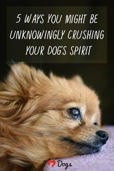 5 Ways You Might Be Unknowingly Crushing Your Dog's Spirit