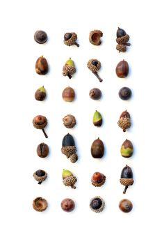 acorns (mary jo hoffman)