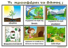 Το νέο νηπιαγωγείο που ονειρεύομαι : Πίνακες αναφοράς για το δάσος Forest Theme, Environmental Education, Holidays And Events, Trees To Plant, Kindergarten, Activities, School, Plants, Greek