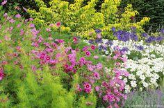 Faciles à cultiver, les cosmos fleurissent tout l'été et donnent des fleurs roses, blanches, mauves.