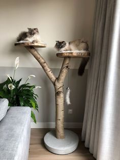 Scratching post for two cats sleeping lying down – kratzbaum Crazy Cat Lady, Crazy Cats, Expanding Foam Insulation, Niche Chat, Diy Cat Tree, Cat Room, Pet Furniture, Office Furniture, Cat Sleeping