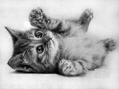 Dibujo a lápiz de un gato.