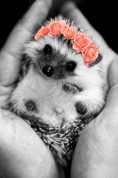 Hedgehog with flower crown