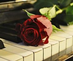 Rosa e piano