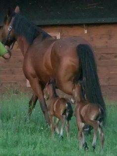 Mother horse with babies