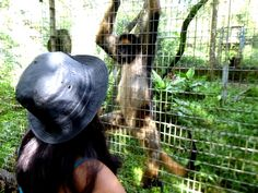 Volunteer with monkeys in Ecuador at an inspiring rescue centre Gap Year, 12 Weeks, Primates, Monkeys, Ecuador, Riding Helmets, Centre, Horses, Animals