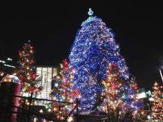 Americká světýlka - Vánoce, vánoce přicházejí......