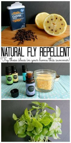 Fly Repellent - ideas for your home! Try these natural fly repellent ideas for your home this summer!Try these natural fly repellent ideas for your home this summer! Keep Flies Away, Get Rid Of Flies, Keep Bugs Away, How To Repel Flies, Plants That Repel Flies, Home Remedies For Flies, Fly Remedies, Natural Remedies, Diy Mosquito Repellent