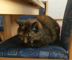 Cat Loaf. Sad Loaf
