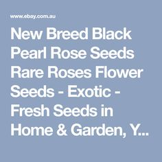 New Breed Black Pearl Rose Seeds Rare Roses Flower Seeds - Exotic - Fresh Seeds in Home & Garden, Yard, Garden & Outdoor Living, Plants, Seeds & Bulbs | eBay!